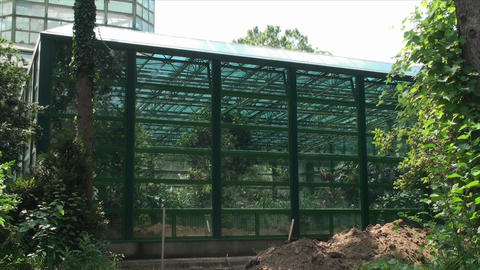 Deserted Green House In A Botanical Garden, Summer Footage