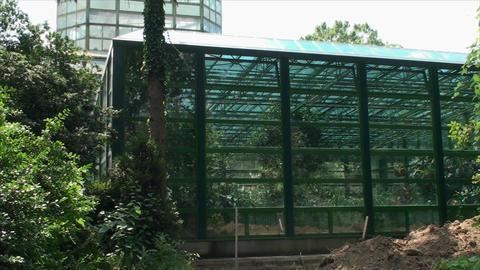 Deserted Green House In A Botanical Garden, Summer Footage