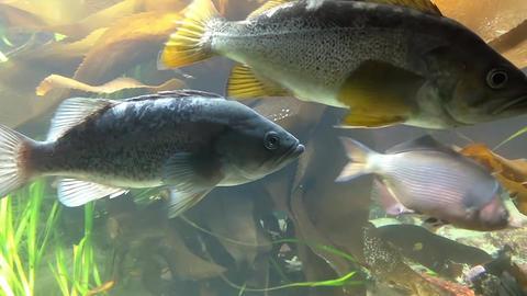Motion of fish underwater inside fishtank Stock Video Footage