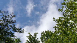 Tree tops with clouds Footage