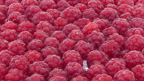 Time-lapse Of Drying Raspberry Berry 1b1 stock footage