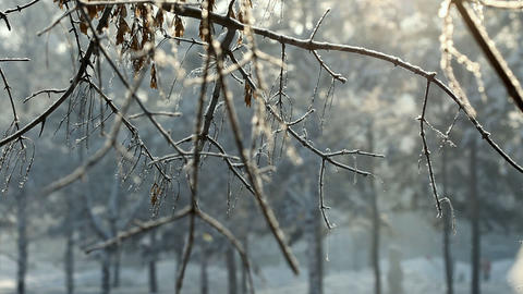 Frost, snowflakes and sunlight Stock Video Footage