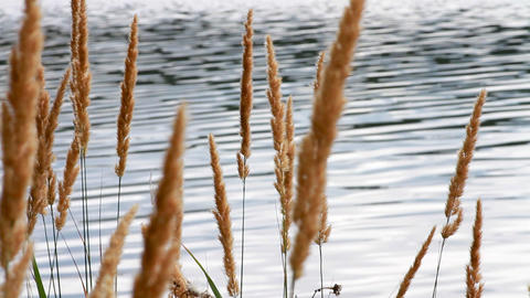 water end Sedge Stock Video Footage