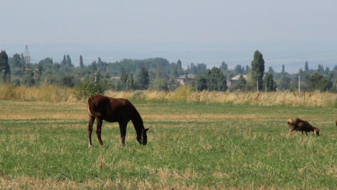 Horses-3 Stock Video Footage