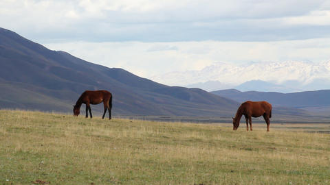 Green pasture Stock Video Footage