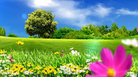 green meadows and flowers Stock Video Footage