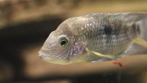 AQUARIUM FISH 0