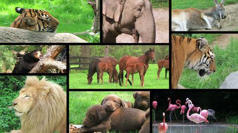 Animal Composite Stock Video Footage