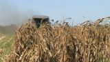 Combine Harvesting Corn 05 stock footage