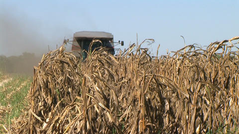 Combine Harvesting Corn 05 Stock Video Footage