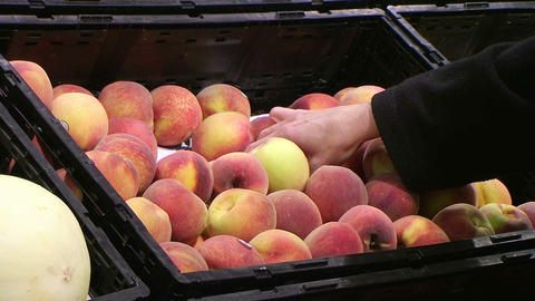 Woman Selecting Peaches In Produce Stock Video Footage