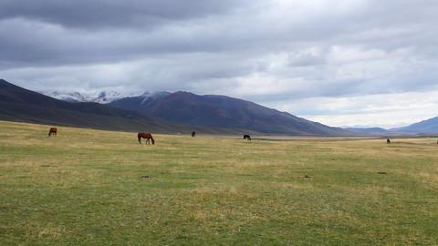 Horses-16 Footage