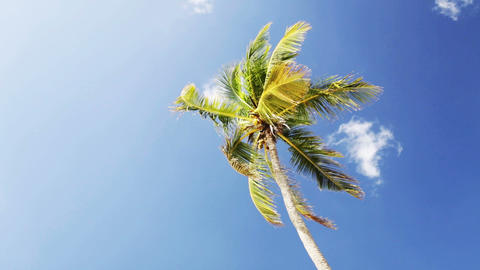palm tree over blue sky with white clouds Footage