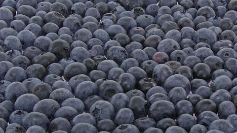 Time-lapse of drying blueberry 1b1 Live Action