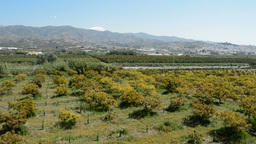 Plantation Of Avocados In South Of Spain PAN stock footage