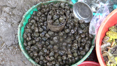 Fresh & live frogs & shellfish to sell in market Footage