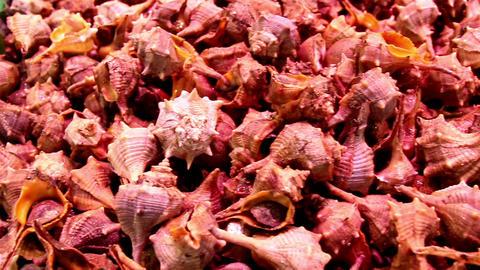 Small sea shells on display piled seashells Footage