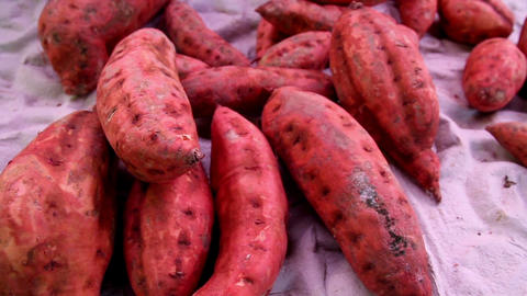 Healthy sweet potato root crop Footage