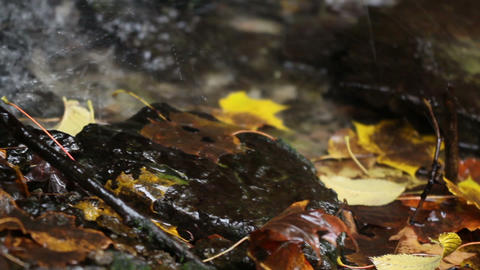 Water falls on rocks and some leaves, Live Action