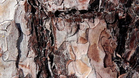 Cracks and lines on the trunk of the tree Footage
