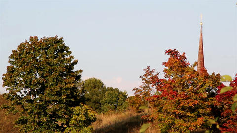 A view of red and green leaves from different tree Footage