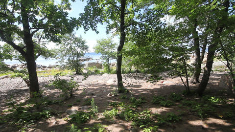 beach with the wood on the Baltic Sea Footage