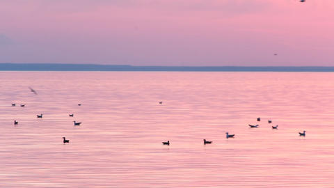 Birds Seagull Freedom Sea Evening Of The Romantic stock footage