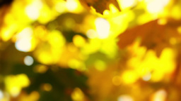 Autumn Background Without Focus stock footage