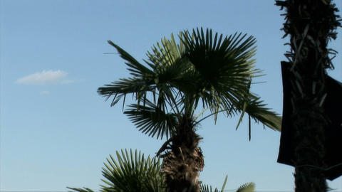 Background with palm tree ビデオ