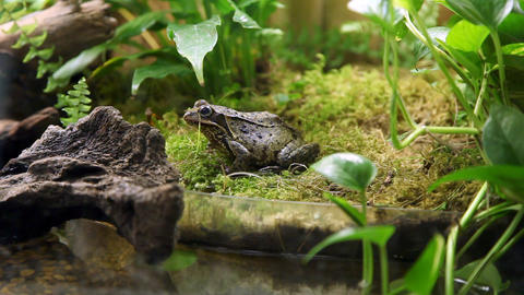 Wide angle shot of a frog sitting in a grass and l Footage