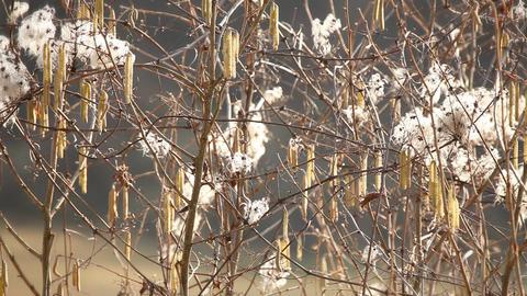 Still shot of shrubs in winter Live Action