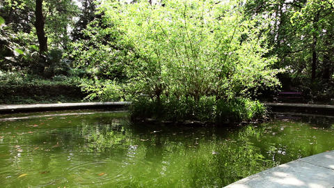 litlle pond in the park Live Action