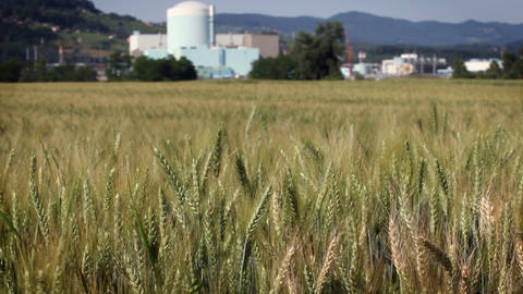 field with grain and factory in the back Live Action