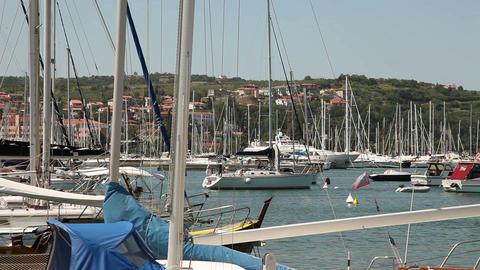A still shot of Piran marine Live Action