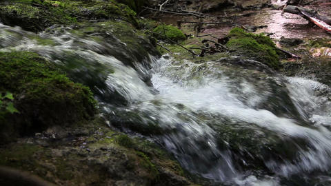 Detailed rapids in the woods Footage
