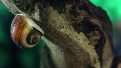 a visit in aquarium and sea snail Live Action