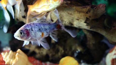 Close up shot of a fish tank Live Action