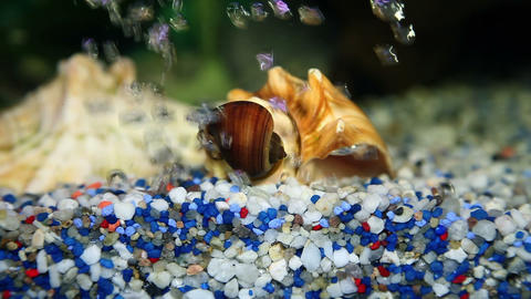 Close Up Shot Of A Snail House On The Bottom Of Th stock footage