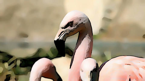 Cartoon effect added to a shot of flamingo walking Live Action