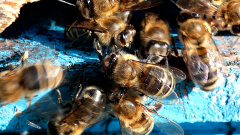 honey bees at the entrance to the hive Footage