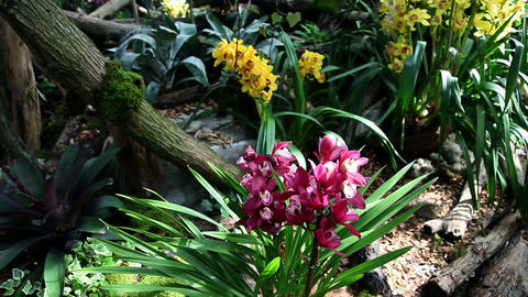orchid in growing and blooming in natural environm Footage
