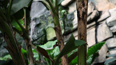 Close up of an exotic plant with a waterfall in th Footage