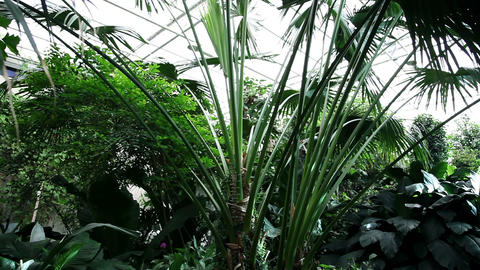 green plants in a botanic garden Footage