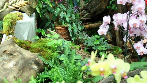Beautiful garden Footage