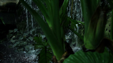 Beautiful flowers in the jungle Footage
