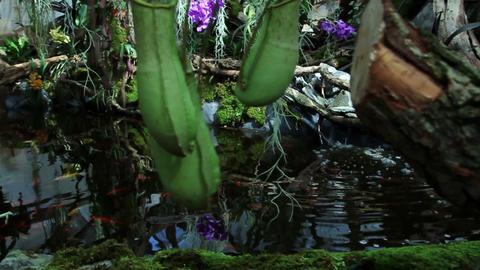 Carnivorous plant Live Action