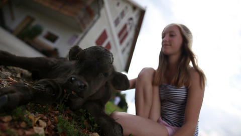 Teenage girl caressing calf in front of the house Footage