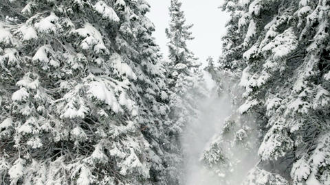 Idyllic winter time of snowy spruce trees Footage