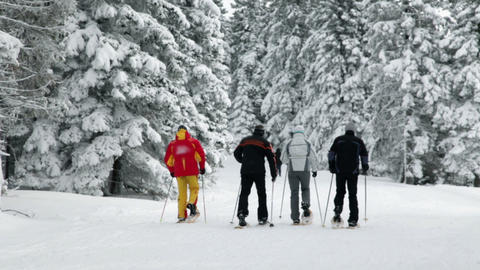 Group Of Seniors Cross-country Skiing In Snowy For stock footage