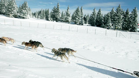 Sledge pulled by huskies in the idyllic winter Footage